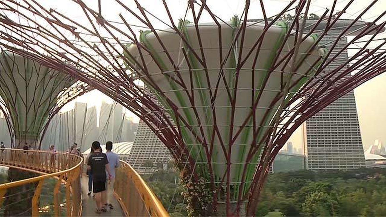 Contiene el invernadero y la cascada artificial más grande del mundo...Gardens by the Bay son unos jardines futuristas presididos por 18 árboles de hormigón y recubiertos con plantas que recogen el agua de lluvia. Es una de las principales atracciones turísticas de Singapur, puesto que por la noche se celebra aquí un espectáculo de luz y sonido. Junto a los jardines, el invernadero cuenta con una impresionante cascada artificial de 30 metros de caída. No te pierdas la siguiente explicación que es para alucinar más si cabe...