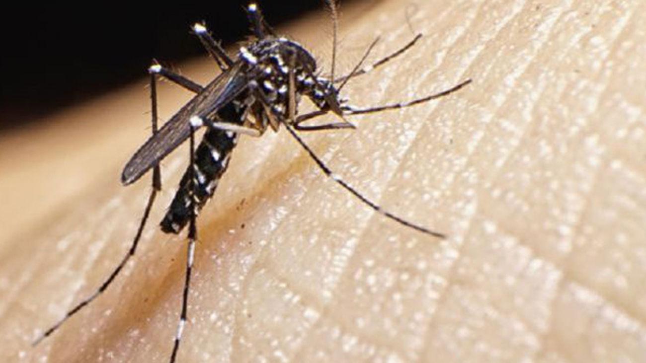 Moscas y mosquitos, una larga historia