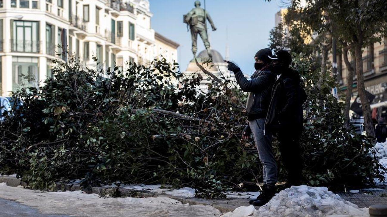 Árboles caídos tras la nevada en la plaza de Cascorro en Madrid